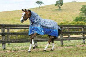 weatherbeeta-comfitec-free-detach-a-neck-heavy-best-horse-fly-sheets