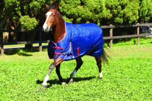 weatherbeeta-original-1200d-lightweight-turnout-sheet-best-horse-rain-sheets