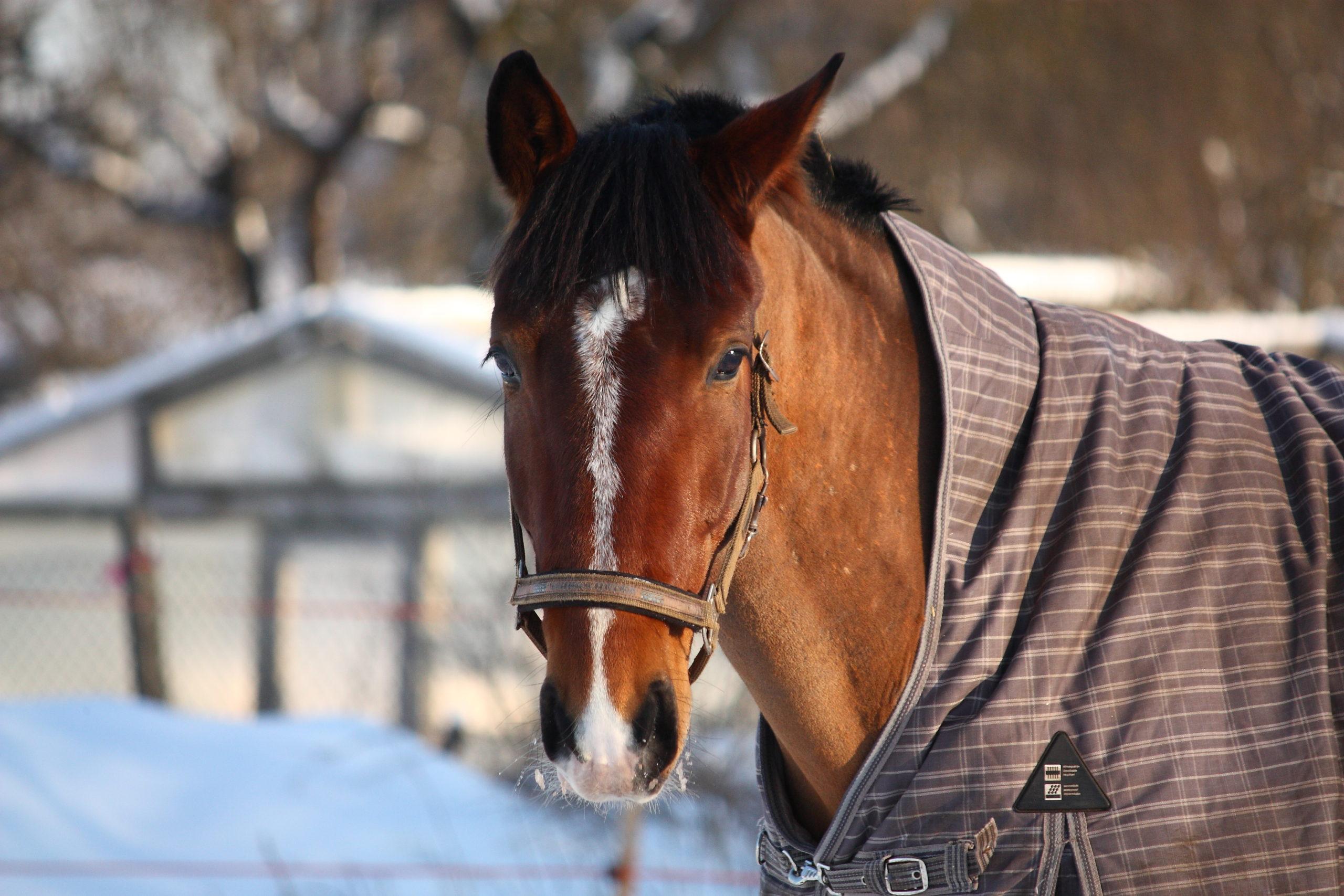 Top ten best horse cooler blankets