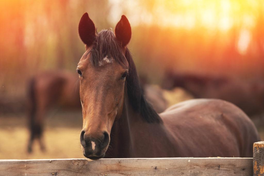 Best Horse Rain sheets